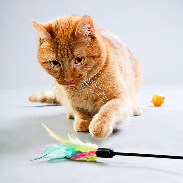 1 cats and play-feather toy