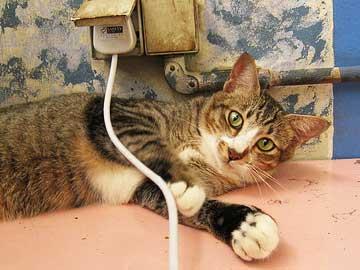 cat_cord_pl